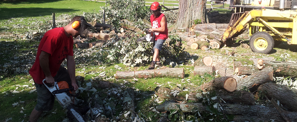 Stump Grinding, Complete Tree Care, East Lansing, MI